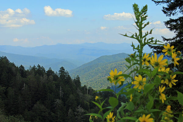 Distan View of the Smoky Mountains
