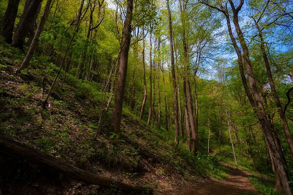 tips for getting un-lost in the woods